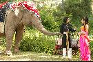 Elephant Princess